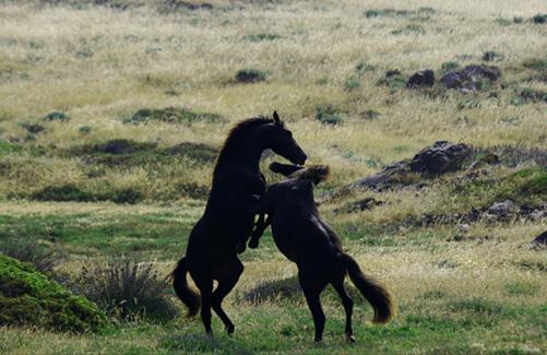 Cavalli Asinara 4×4