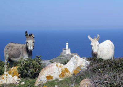 Asino bianco e grigio Punta Scorno