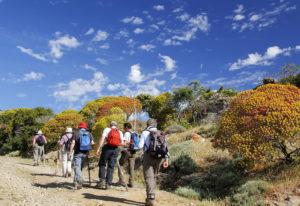 Trekking Asinara in primavera con nuvole e euphorbia colorata